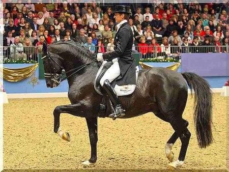 28-31 марта Чемпионат по конному спорту в Конно-спортивной школе Олимпийского резерва