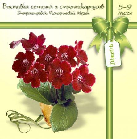 C 5 по 9 мая, Выставка сенполий и стрептокарпусов