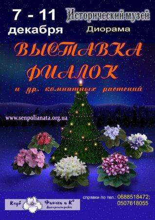 7 - 11 декабря, Выставка фиалок