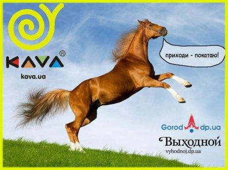 28 января, Катание на лошадях
