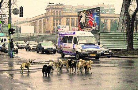 В Днепре боятся эпидемии бешенства: от бродячих псов за год пострадали 1250 человек