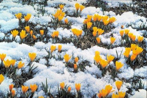 Весна принесет в Днепропетровск морозы