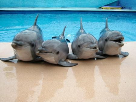 В Севастополе неизвестные захватили дельфинарий