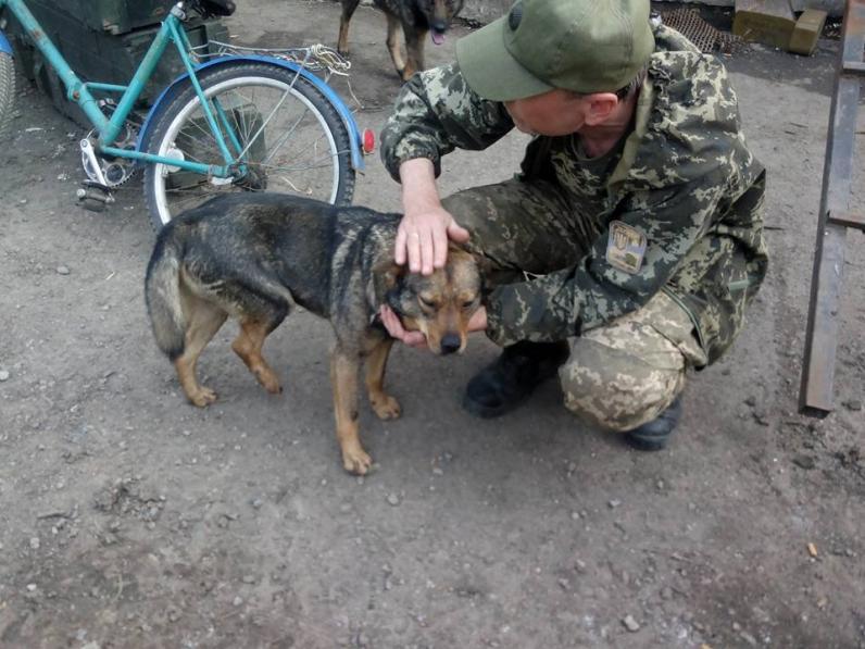 Волонтеры ищут хозяина для пса из зоны АТО, который подорвался на «растяжке»