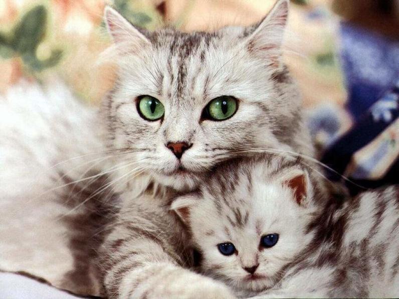 Днепропетровцев могут заставить стерилизовать всех домашних животных