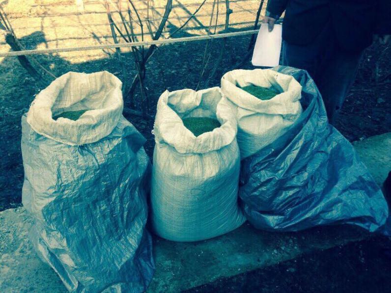 Полицейские нашли 100 кг травки на миллион грн.