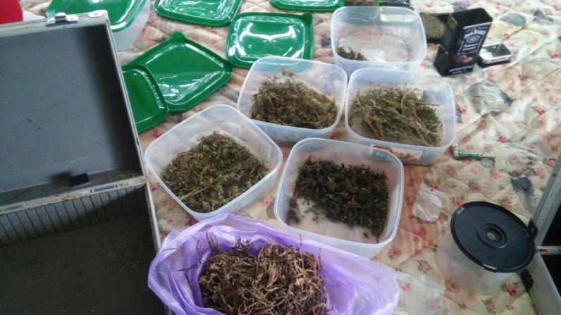 На Днепропетровщине полицейские нашли марихуаны на 400 тысяч гривен
