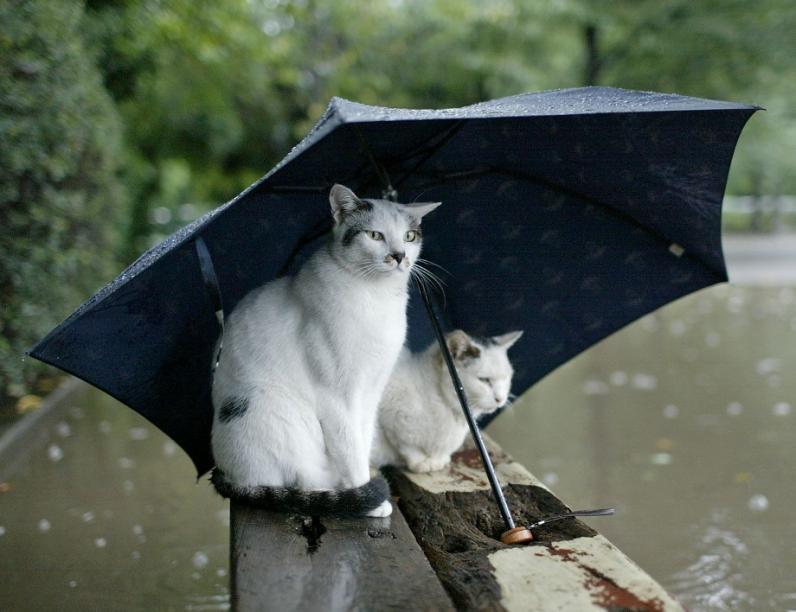 На Днепропетровщине завтра будут грозовые дожди