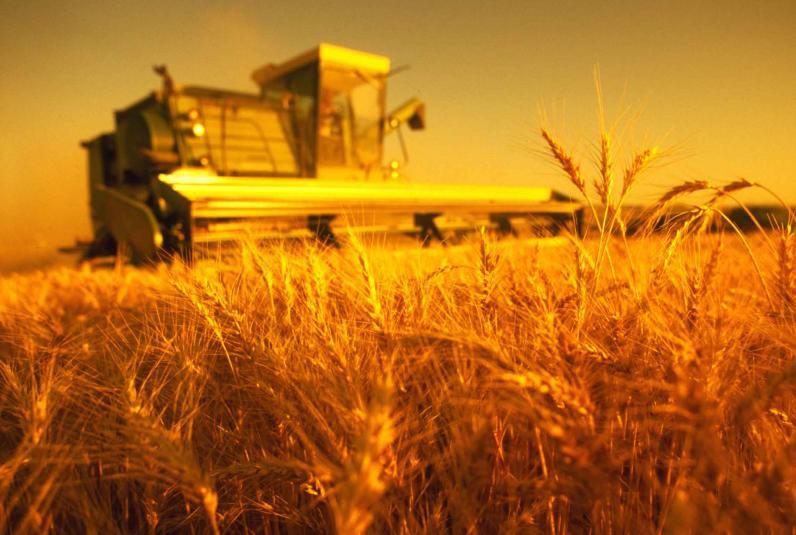 На Днепропетровщине уже собирают урожай