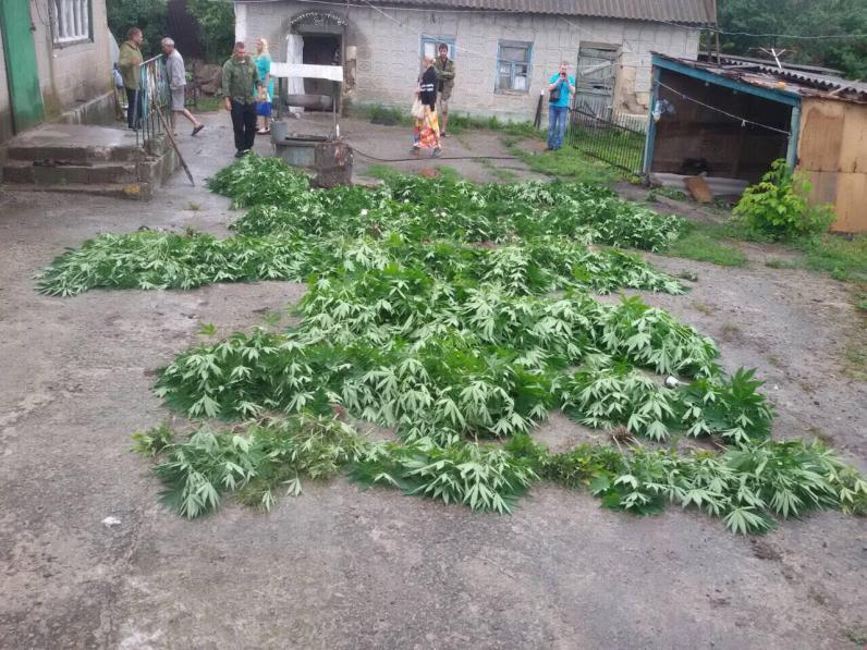На Днепропетровщине полицейские нашли плантацию марихуаны на 5 млн. грн. (Фото)