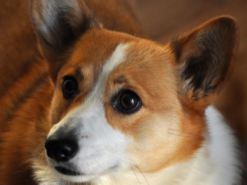 В Днепре выберут лучшую беспородную собаку