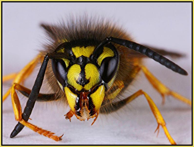 На Днепропетровщине осы искусали дворника до смерти