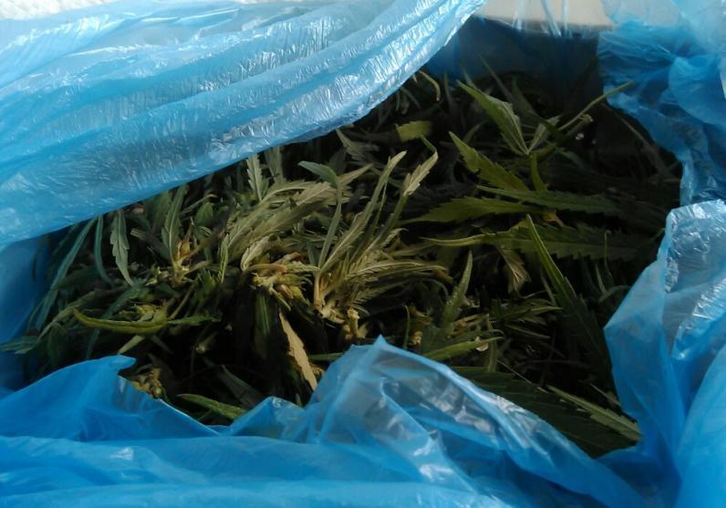 В Днепре задержали мужчину, который привез в город 5 кг марихуаны