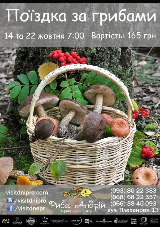 Похід за грибами