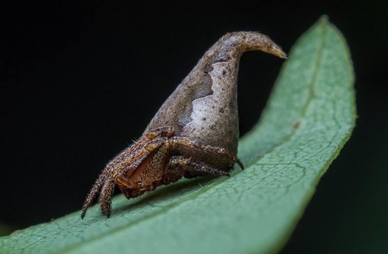 В Индии ученые нашли паука, похожего на персонажа из Гарри Поттера