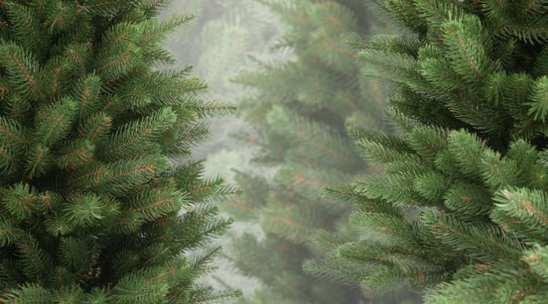 Днепрян просят покупать елки в горшках