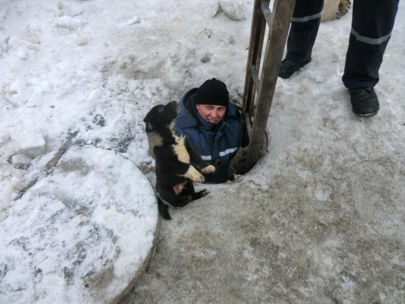 На Днепропетровщине спасатели вытащили щенка из канализации