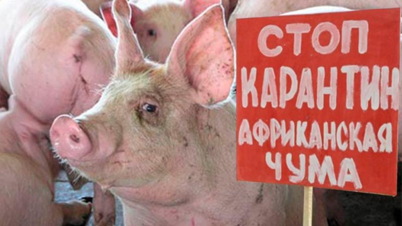 На Днепропетровщине зарегистрировано 3 очага африканской чумы свиней
