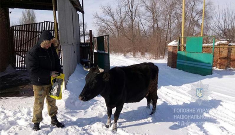 На Днепропетровщине полицейские нашли украденную корову