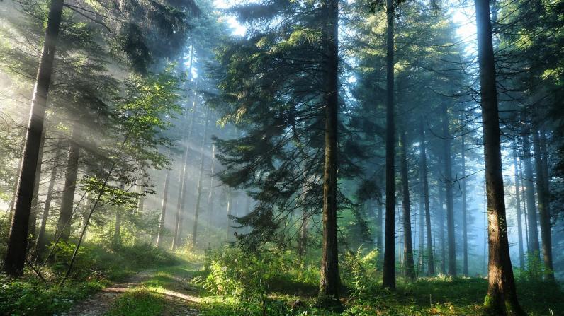 На Днепропетровщине незаконно раздавали лес