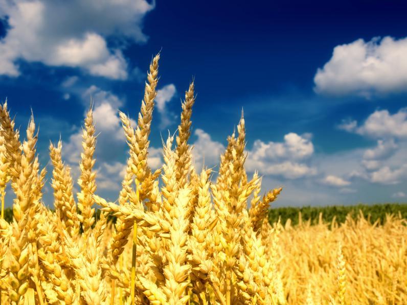 Экспорт агропродукции растет