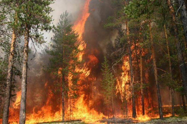 На Днепропетровщине объявили о чрезвычайной пожарной опасности