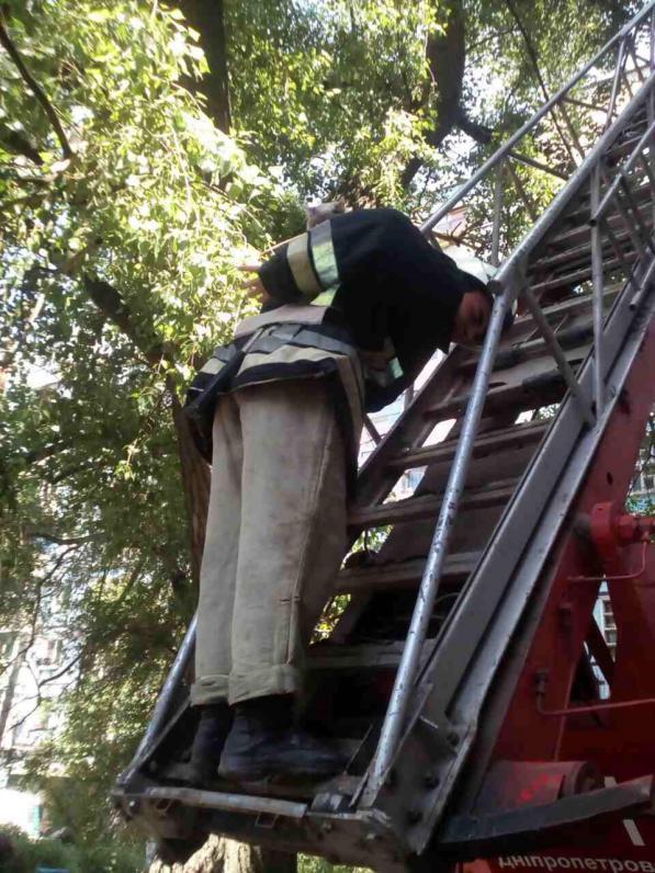 В Днепре спасатели сняли с дерева кота