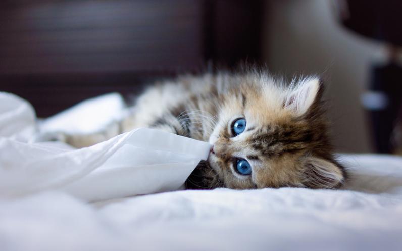 Можно ли спать в одной кровати с домашним питомцем