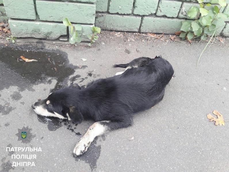 В Днепре полицейские спасли щенка, которого сбила машина