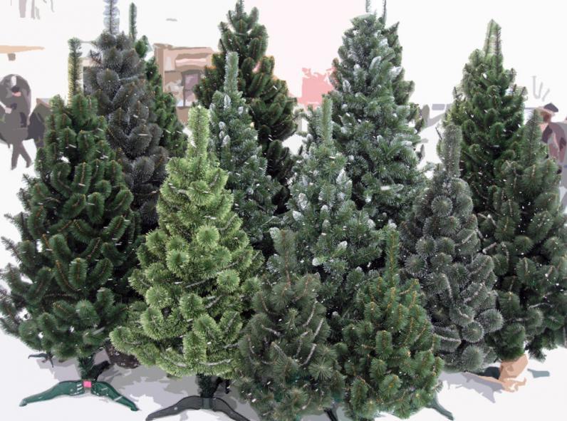 В Украине начали продавать елки к Новому году: как выбрать хорошую