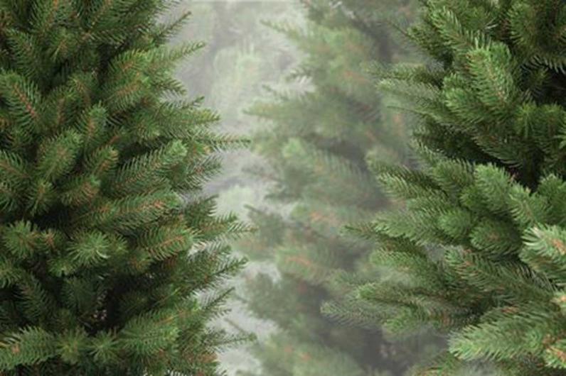 Жителей Днепра просят выбрасывать елки по конкретным адресам