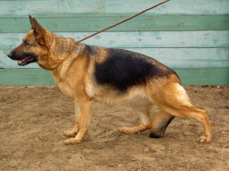 На Днепропетровщине служебная собака нашла в лесополосе тело избитого мужчины