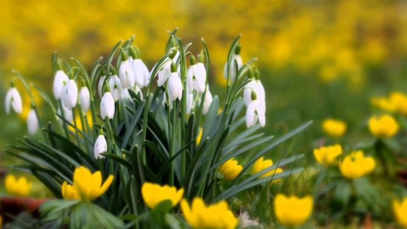 Когда на Днепропетровщину придет весна