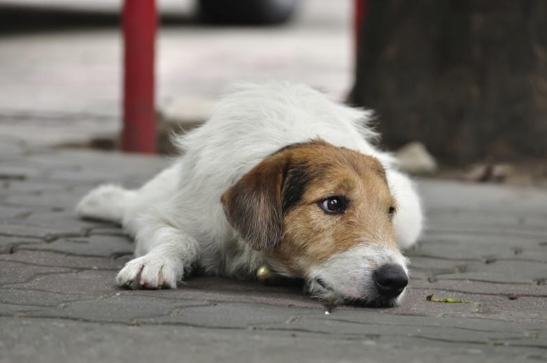 В Днепре посчитали бездомных собак