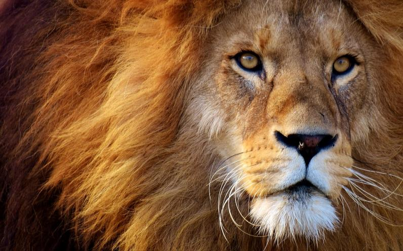 Из турбазы под Днепром сбежал лев