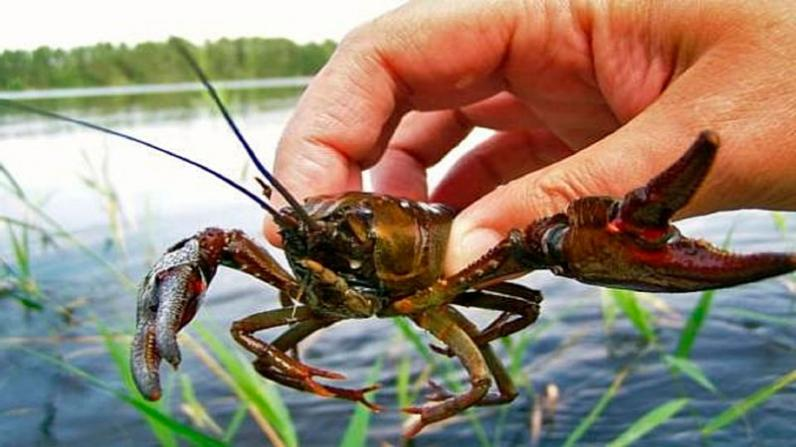 На водоемах Днепропетровщины запрещено вылавливать раков