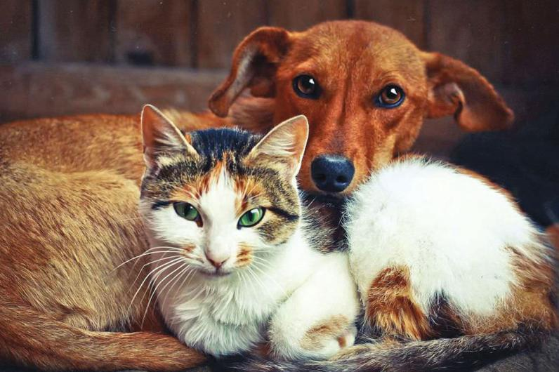 От чего могут спасти домашние куры или собаки