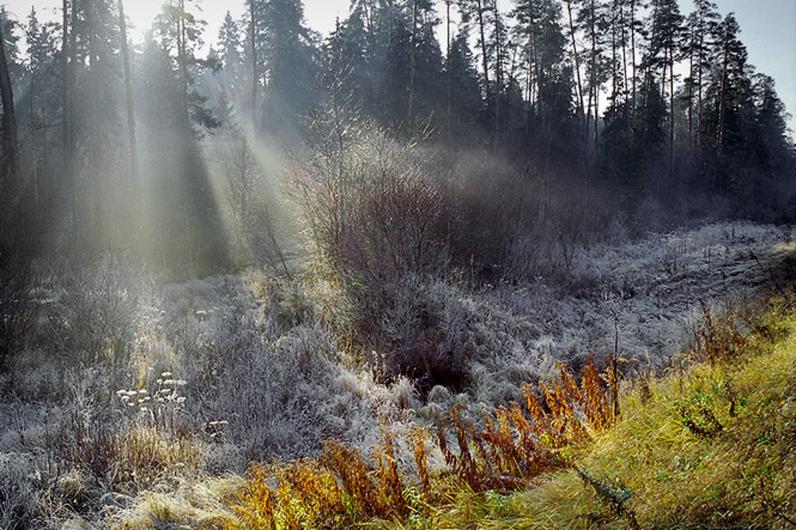 Туман и заморозки: прогноз погоды на неделю
