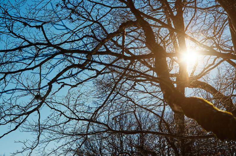 На уборку деревьев в двух парках Днепра потратят 1,5 млн грн
