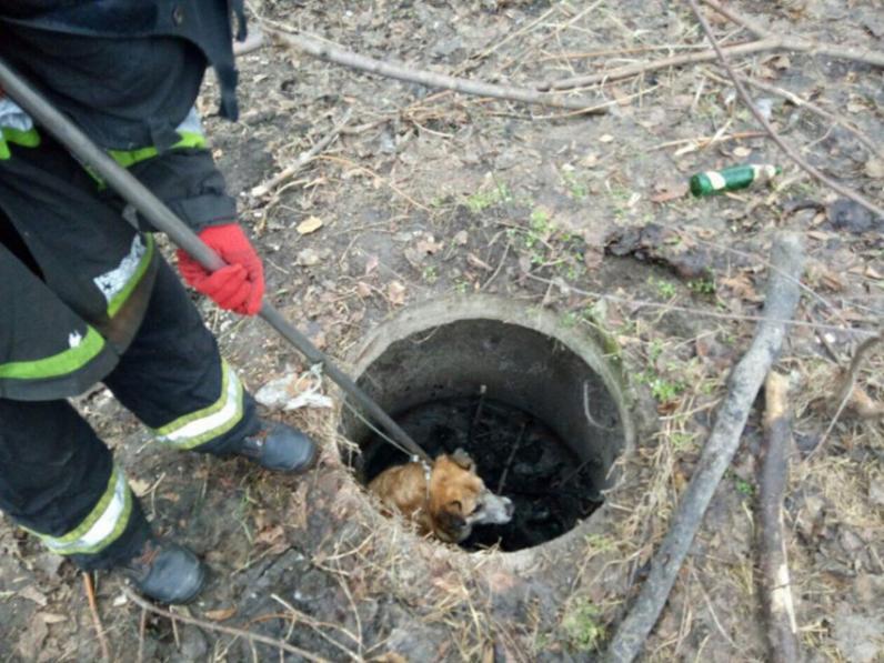 В Днепре спасли собаку, которая провалилась в люк